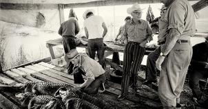 After the Alligator Hunt