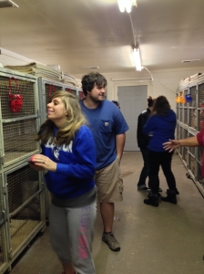 Students Aimee Bishop and Brian Hester check out greyhounds in their kennel.